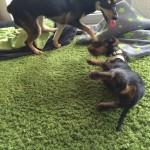 Spielen mit ihrer großen Hunde-Freundin Pica macht großen Spaß