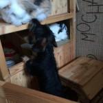 Pebby hat auch viele andere Tiere kennen gelernt- hier: Kaninchen