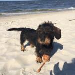 Sonne, Strand, Meer und ein glückliches Dackelmädchen